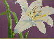 kendra-burton-art-thoroughly-modern-lily-lg